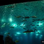 Oceanarium w Lizbonie najlepsze na świecie