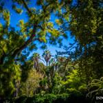 Enklawa ciszy w centrum – ogród botaniczny w Lizbonie