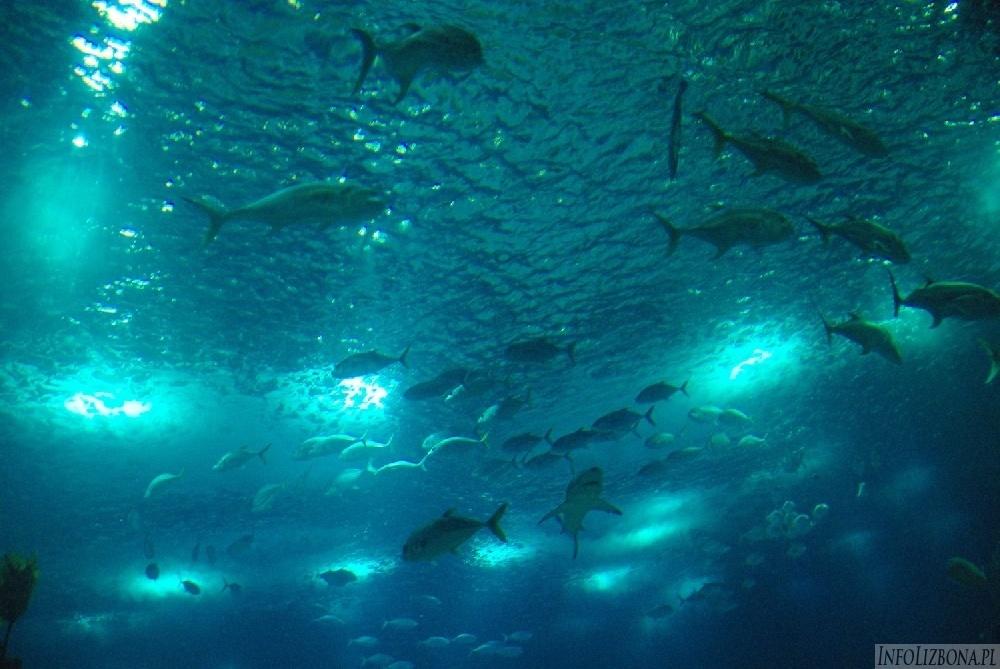 Najlepsze oceanarium na świecie jest w Lizbonie 2018 lizbona akwarium opis informacje bilety przewodnik poradnik