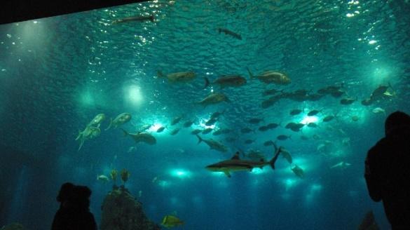 Lizbona Oceanarium w Lizbonie Portugalia