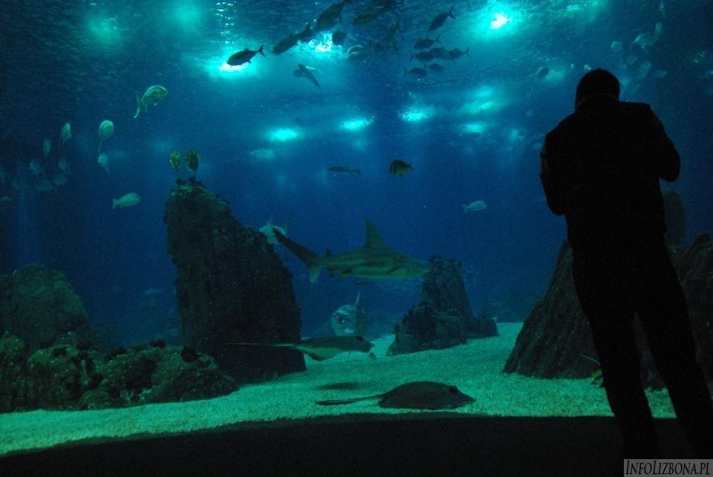 IS_Lizbona Lisbon Lisboa Oceanarium Belem centrum zdjecia pics foto 000165