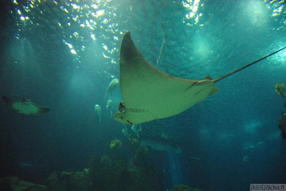 Lizbona Oceanarium zdjęcia foto photos przewodnik