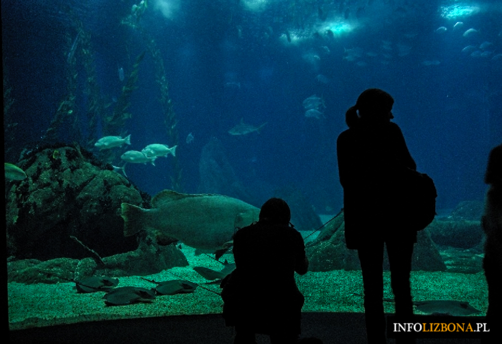 Oceanarium w Lizbonie najlepsze na świecie 2015 tripadvisor