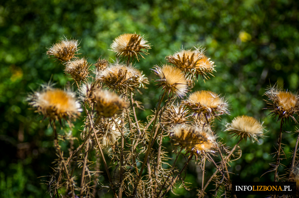 Ogród Botaniczny w Lizbonie Fotografie Przewodnik Lizbona Lisbona Ogrody Botaniczne Zwiedzanie Przewodnik Zabytki Foto