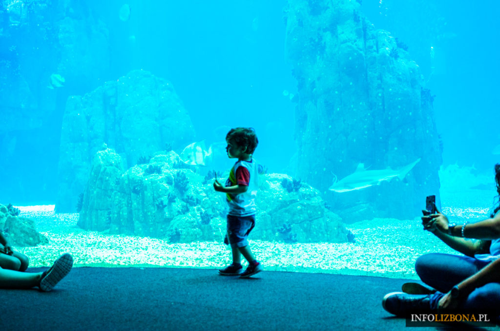 Lizbona Oceanarium Cena Bilety Online Aktualne Ceny Polski Przewodnik Zwiedzanie Godziny Otwarcia Czy Warto Zobaczyć Zdjęcia Opinie Oriente Ryby
