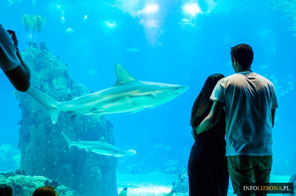 Akwarium Lizbona oceanarium w Lizbonie fotografie zdjęcia photo foto fotografia opis opinie zwiedzanie wystawy ceny bilet polski przewodnik zwiedzanie