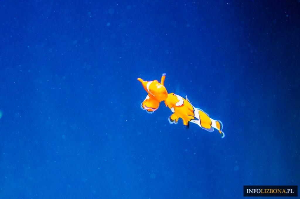 Oceanarium Lizbona Portugalia Lisbon Lisbona Czy Warto Opinie Przewodnik Zwiedzanie Bilety Cena Zdjęcia Akwarium Ryby Kolejki