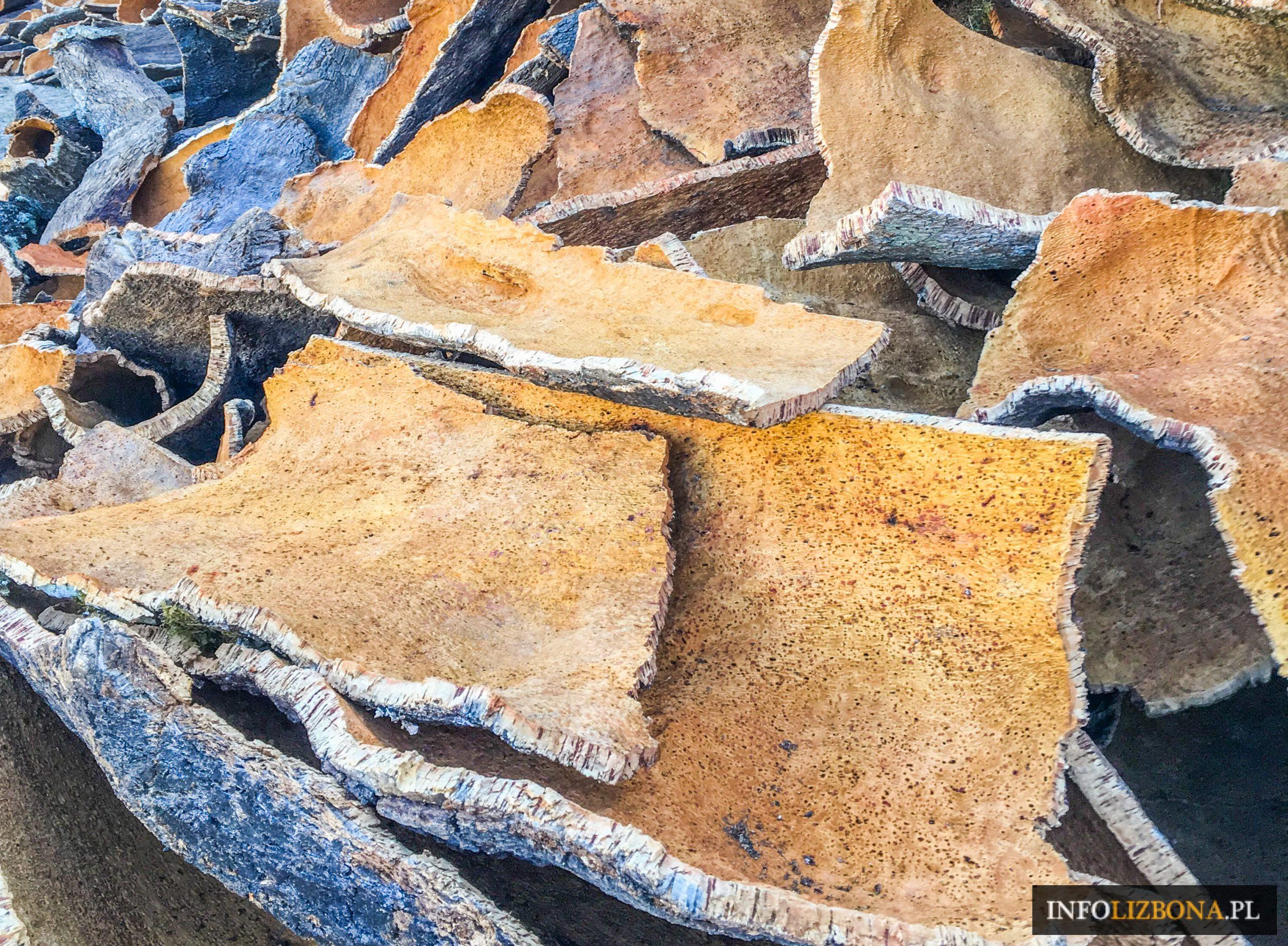 Korek Portugalski Portulia Korek Wyroby z Korka Korkowe Rzeczy Zwiedzanie Portugalii Alenetejo Lasy Korkowe Plantacje Fabryki Przewodnik Dąb korkowy Kupno Cena Gdzie Kupić
